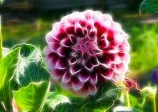 Flor e sol Imagens de Stock