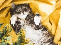 Flor e um gatinho bonito foto de stock royalty free