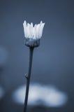 Flor elegante Imágenes de archivo libres de regalías