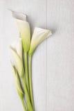 Flor elegante de la primavera, cala Foto de archivo libre de regalías