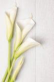Flor elegante de la primavera, cala Fotografía de archivo