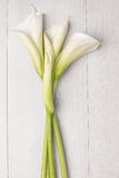 Flor elegante de la primavera, cala Fotos de archivo