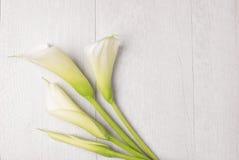 Flor elegante de la primavera, cala Imagen de archivo libre de regalías