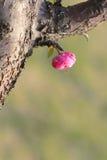 Flor em botão Imagens de Stock