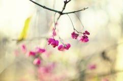 Flor em botão cor-de-rosa bonita Fotos de Stock Royalty Free