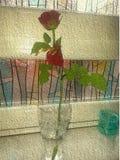 Flor em botão na sala fotografia de stock