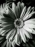 Flor em Burlington N C imagem de stock