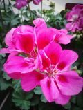 Flor em Burlington N C fotos de stock royalty free