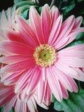 Flor em Burlington N C imagens de stock