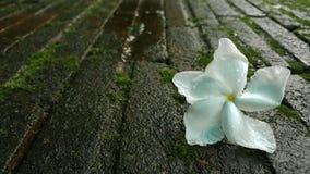 Flor em estações de mola para o fundo Foto de Stock