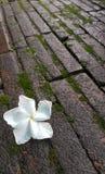 Flor em estações de mola para o fundo Imagens de Stock