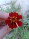 flor em meu jardim fotos de stock royalty free