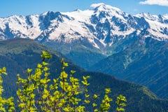 Flor em montanhas da neve Imagens de Stock