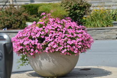Flor em nossa cidade Fotos de Stock Royalty Free