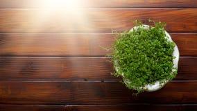 Flor em pasta sobre o fundo de madeira da tabela Imagens de Stock