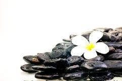Flor em pedras pretas molhadas do zen Imagem de Stock