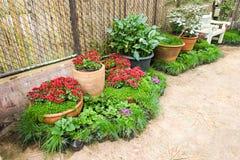 Flor em projetos do jardim Imagens de Stock Royalty Free