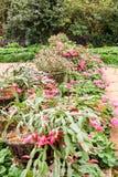 Flor em projetos do jardim Imagens de Stock
