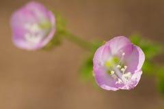 Flor em Tailândia Fotografia de Stock Royalty Free