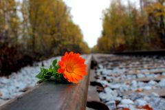 Flor em um aço Imagens de Stock
