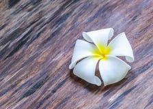 Flor em um assoalho de madeira Imagens de Stock