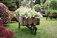 Flor em um jardim Fotos de Stock Royalty Free