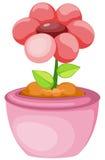 flor em um potenciômetro Foto de Stock