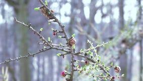 Flor em uma árvore conífera filme