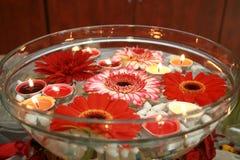 Flor em uma bacia Fotos de Stock Royalty Free