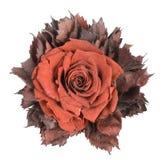 Flor empoeirada de matéria têxtil | Isolado Fotos de Stock Royalty Free