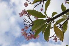 Flor en árbol Imagenes de archivo
