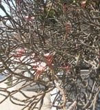Flor en árbol deshojado Imágenes de archivo libres de regalías