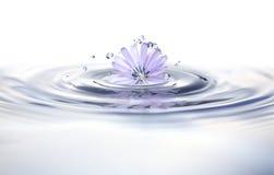 Flor en agua Fotos de archivo