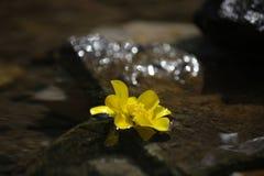 Flor en agua Foto de archivo
