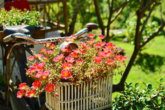 Flor en bicicleta Imagen de archivo