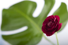 Flor en blanco Imagen de archivo libre de regalías