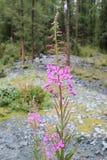 Flor en bosque Imagenes de archivo