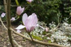 Flor en bosque Imágenes de archivo libres de regalías