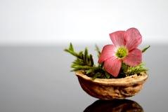 Flor en cáscara de nuez foto de archivo libre de regalías