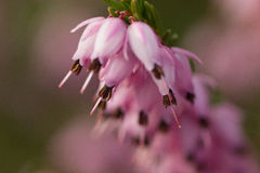 Flor en cierre para arriba imagen de archivo libre de regalías