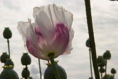 Flor en cierre para arriba imagenes de archivo
