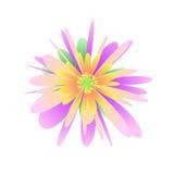 Flor en colores pastel en el blanco Fotos de archivo libres de regalías