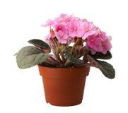 Flor en crisol Fotografía de archivo libre de regalías