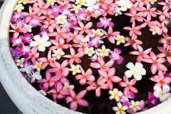 Flor en cuenco Foto de archivo libre de regalías