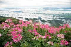 Flor en diverso color imagenes de archivo