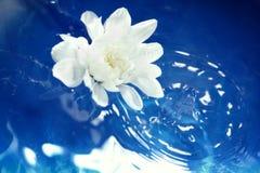 Flor en el agua fotografía de archivo libre de regalías