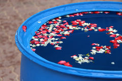 Flor en el agua Imagenes de archivo