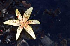 Flor en el agua fotos de archivo