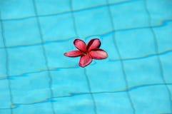 Flor en el agua en piscina Foto de archivo