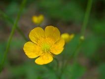 Flor en el bosque Fotos de archivo libres de regalías